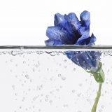Aqua blau 2